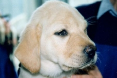 Michael\'s Guide Dogs for the Blind days