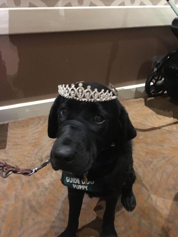 Alamo wearing a silver rhinestone tiara